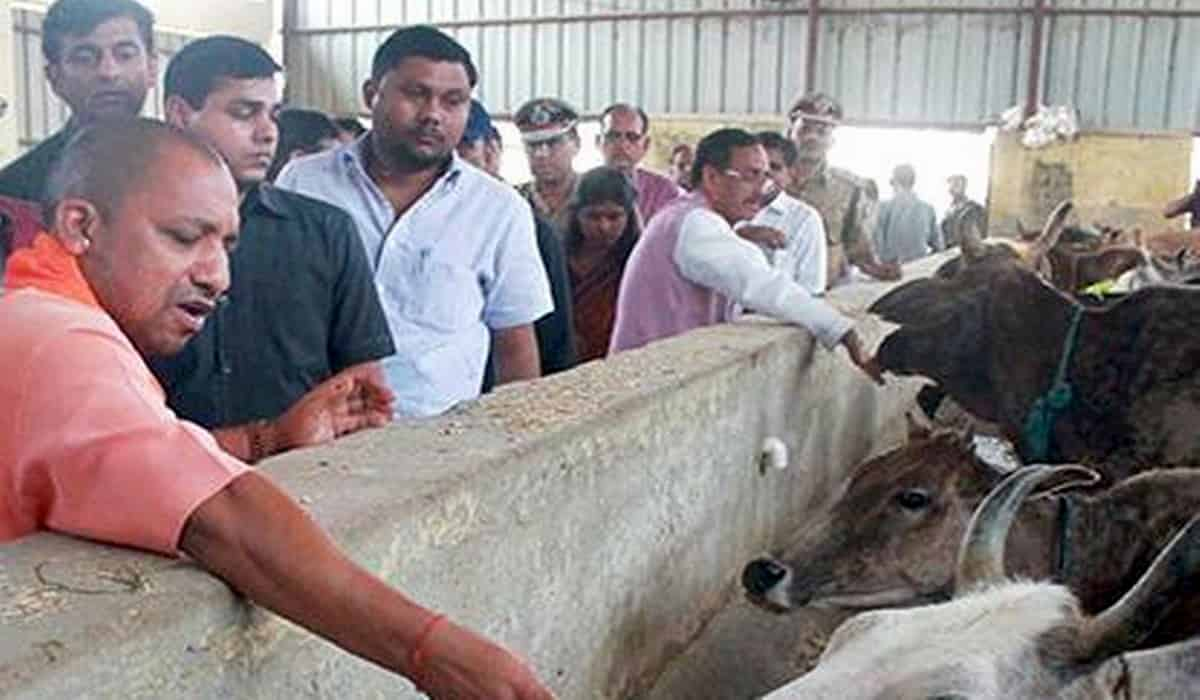UP Cow Shelter Scam