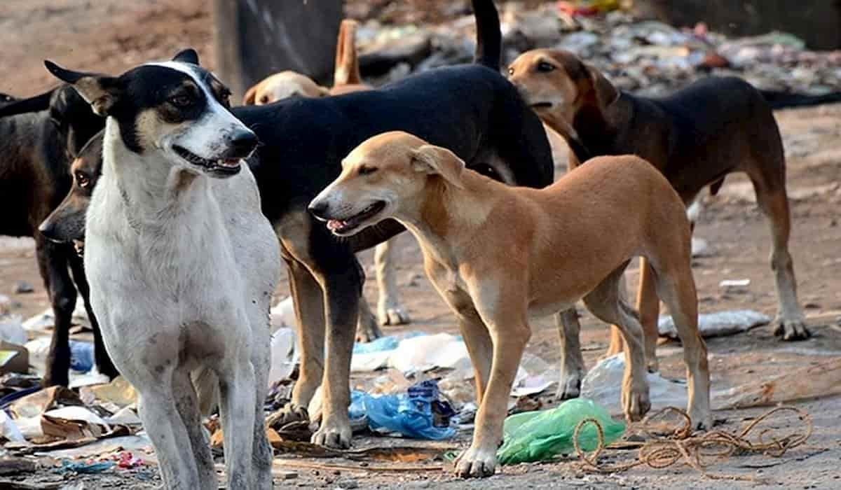 Dogs Kept Chasing dead body of newborn