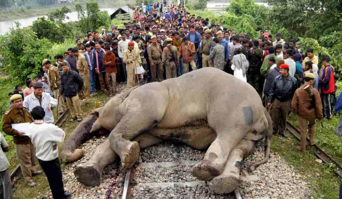 Odisha elephant death