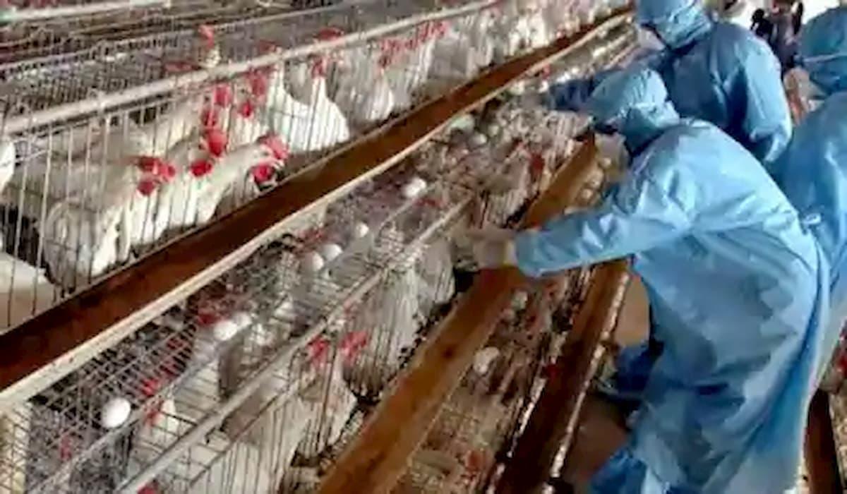 Bird Flu Creates Havoc in Many States of India